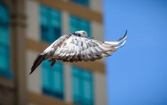 Zabezpieczenia przeciw gołębiom